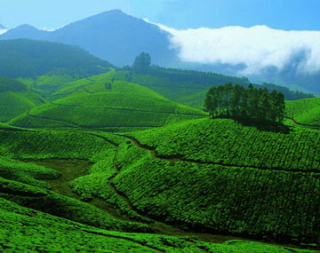 Munnar Holidays From Cochin BookOtrip