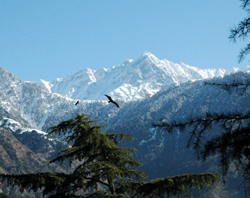 Dharamshala Weekend Break Tour BookOtrip